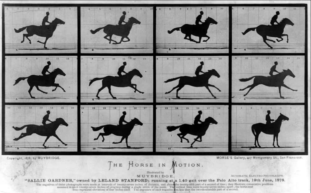 Мэйбридж - фото лошади